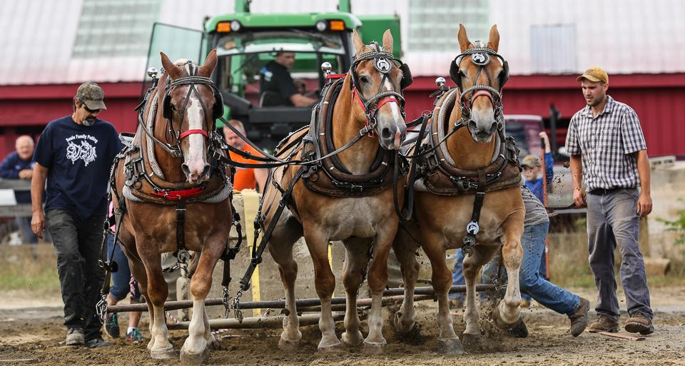 rochesterfair2016-triplehorsepull-6y9a2485