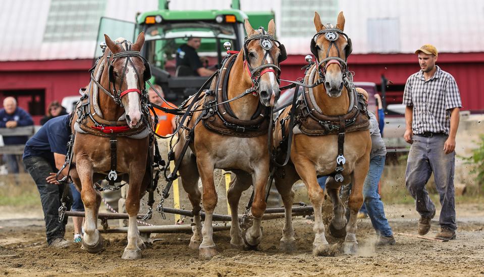 rochesterfair2016-triplehorsepull-6y9a2487