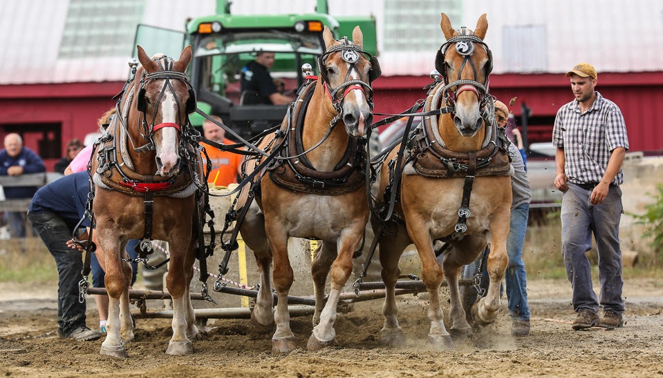 rochesterfair2016-triplehorsepull-6y9a2488