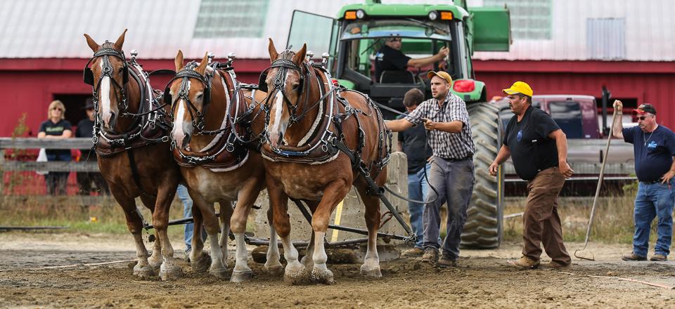 rochesterfair2016-triplehorsepull-6y9a2492