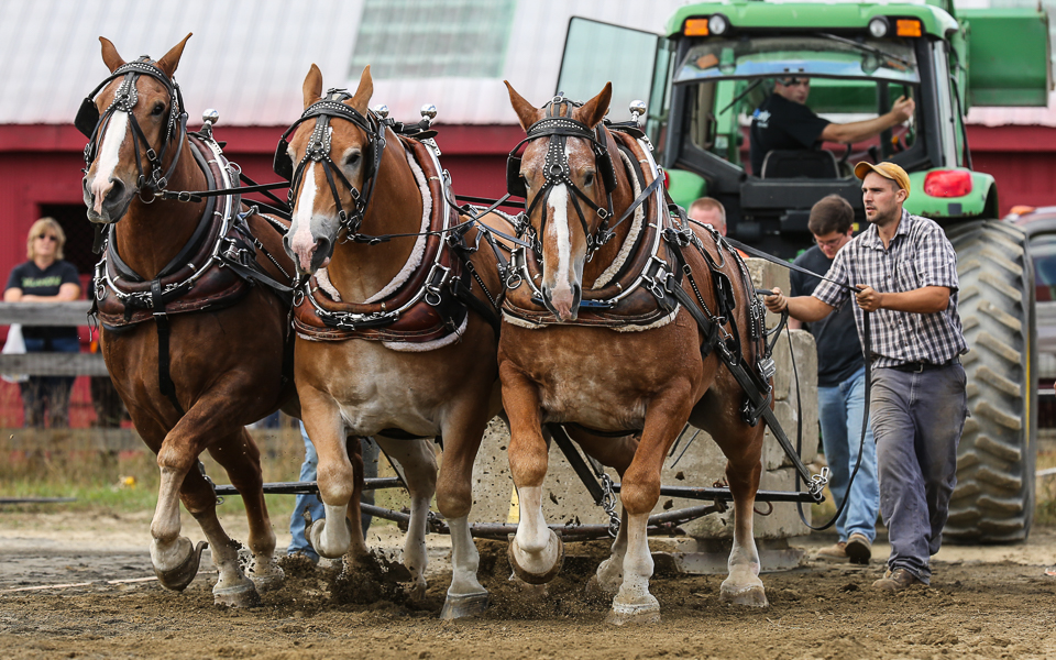 rochesterfair2016-triplehorsepull-6y9a2493