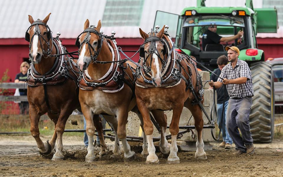 rochesterfair2016-triplehorsepull-6y9a2494