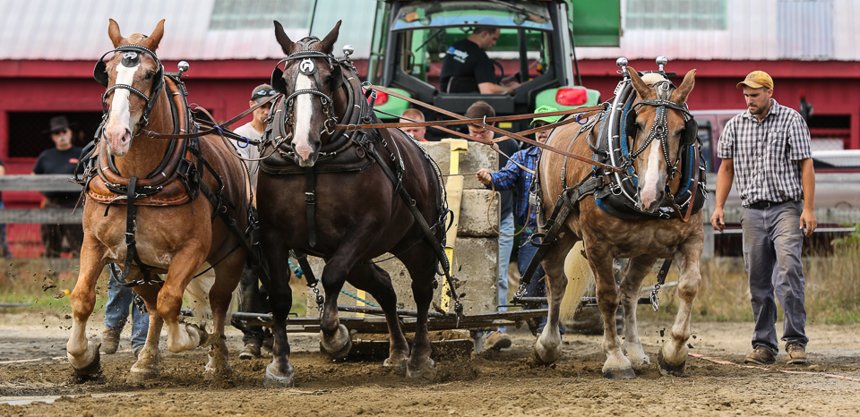 rochesterfair2016-triplehorsepull-6y9a2530