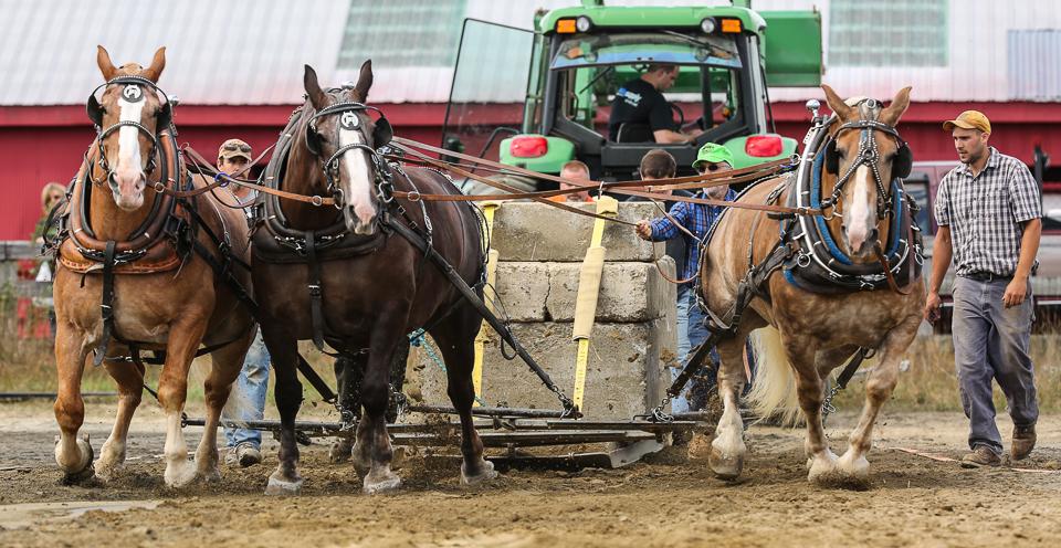 rochesterfair2016-triplehorsepull-6y9a2535