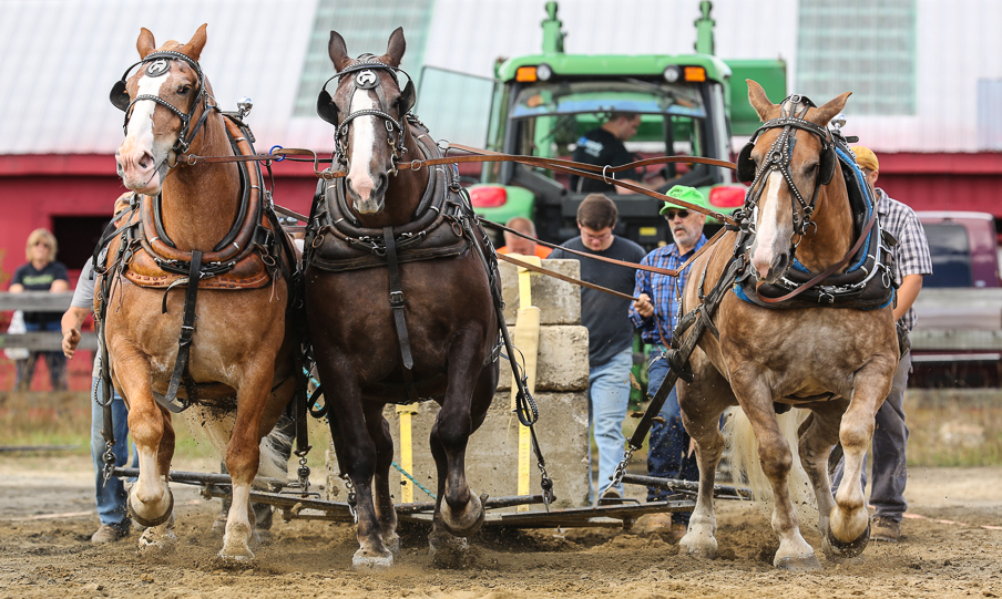 rochesterfair2016-triplehorsepull-6y9a2545
