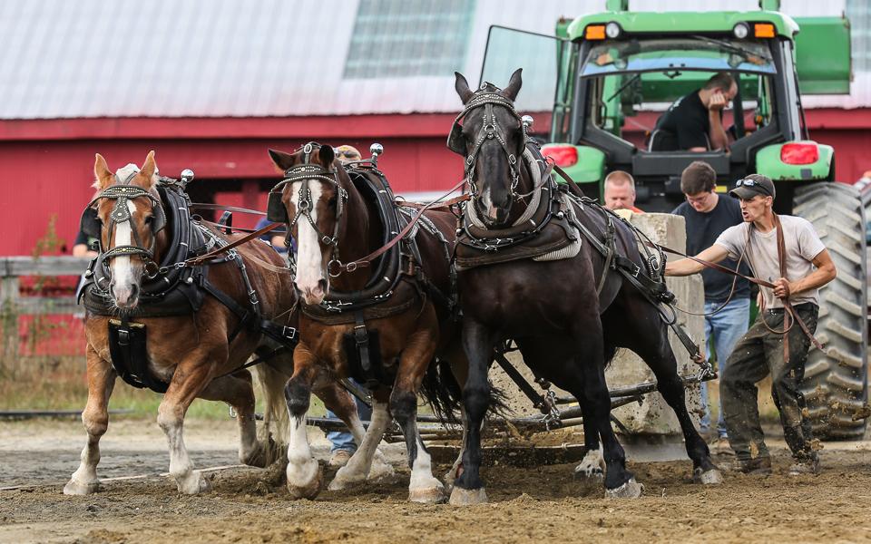 rochesterfair2016-triplehorsepull-6y9a2579