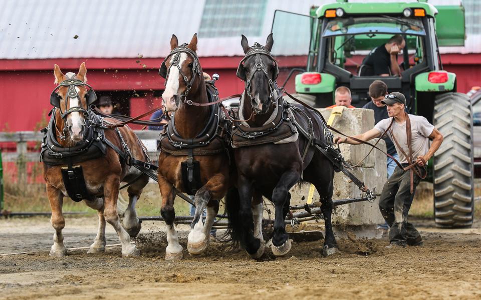 rochesterfair2016-triplehorsepull-6y9a2581