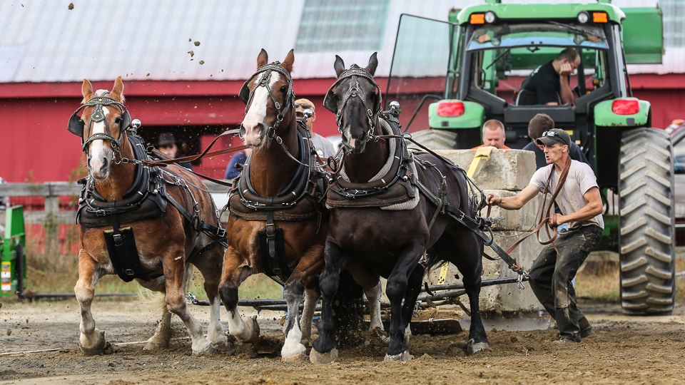 rochesterfair2016-triplehorsepull-6y9a2582