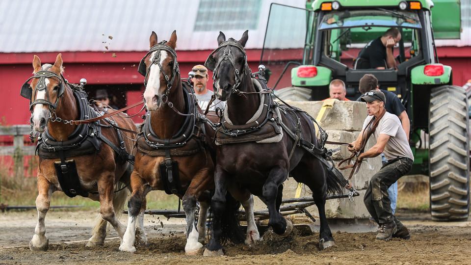 rochesterfair2016-triplehorsepull-6y9a2583