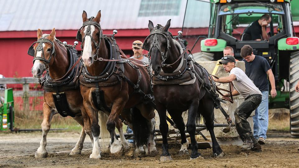 rochesterfair2016-triplehorsepull-6y9a2586