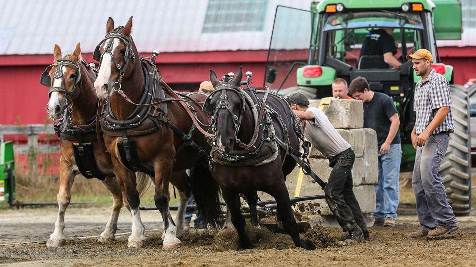 rochesterfair2016-triplehorsepull-6y9a2590