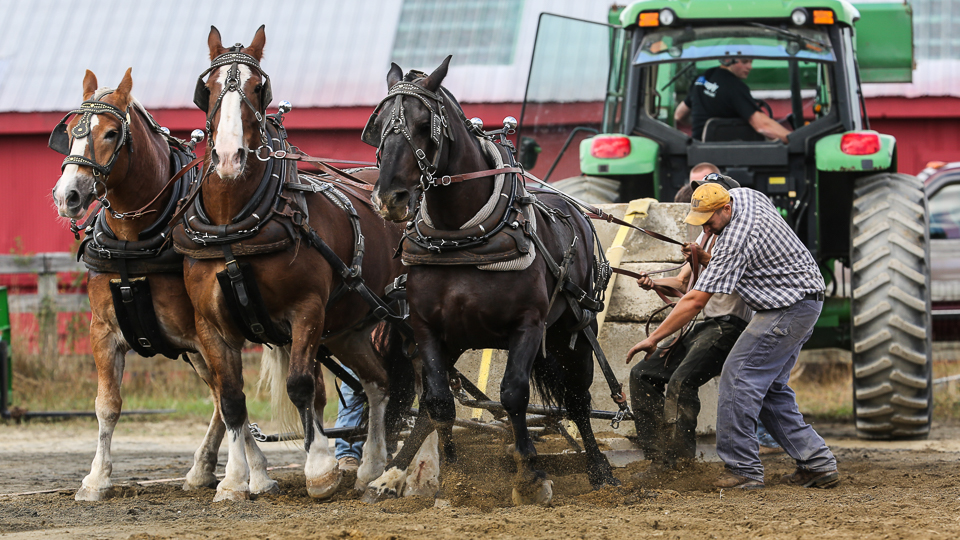 rochesterfair2016-triplehorsepull-6y9a2598