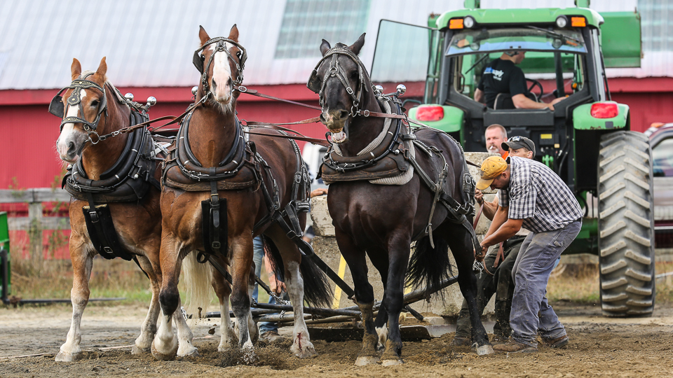 rochesterfair2016-triplehorsepull-6y9a2601