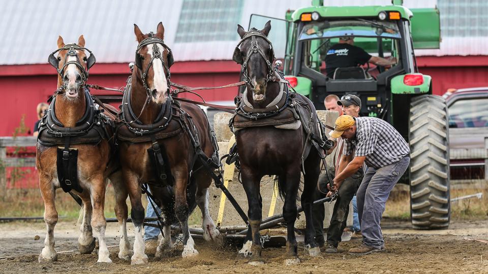 rochesterfair2016-triplehorsepull-6y9a2606