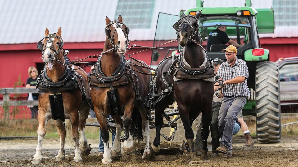 rochesterfair2016-triplehorsepull-6y9a2613
