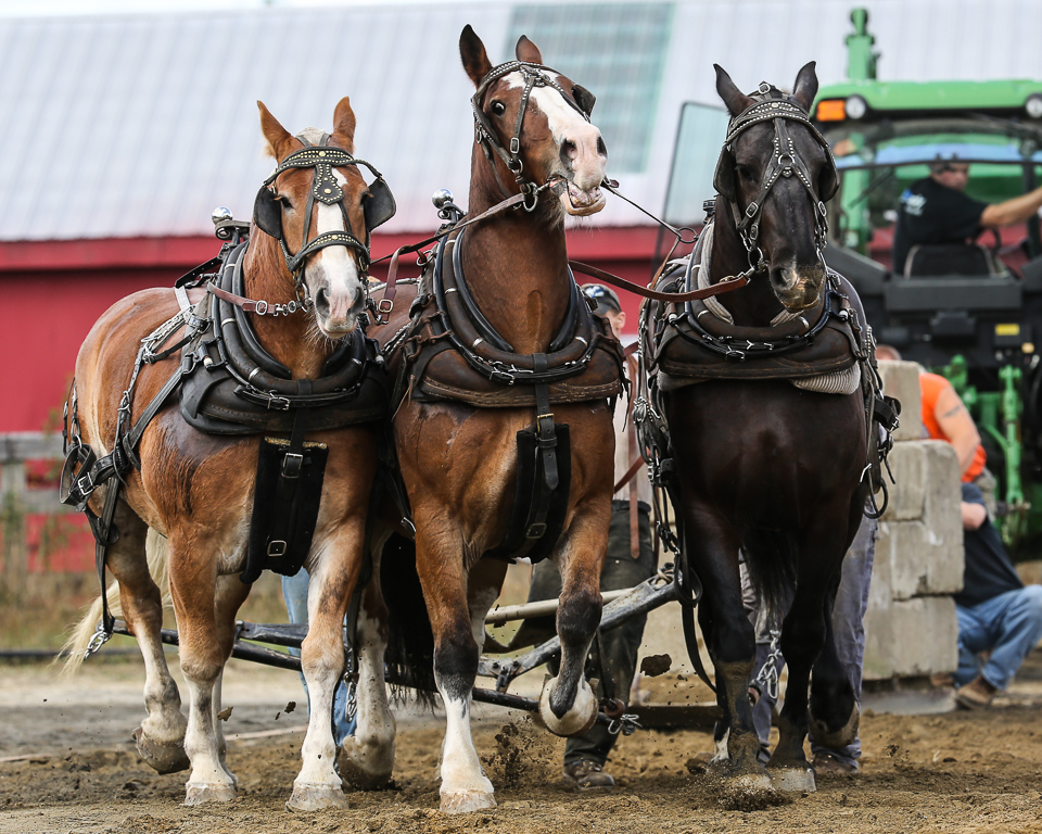 rochesterfair2016-triplehorsepull-6y9a2619