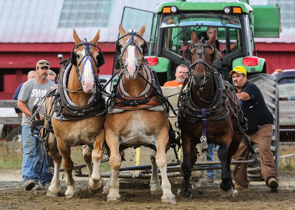 rochesterfair2016-triplehorsepull-6y9a2637