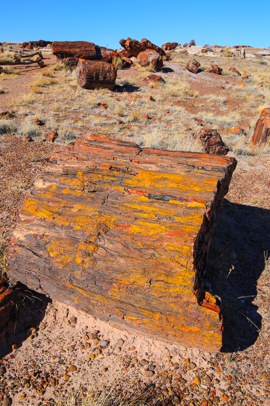 petrifiedforest12-8-20166y9a4548