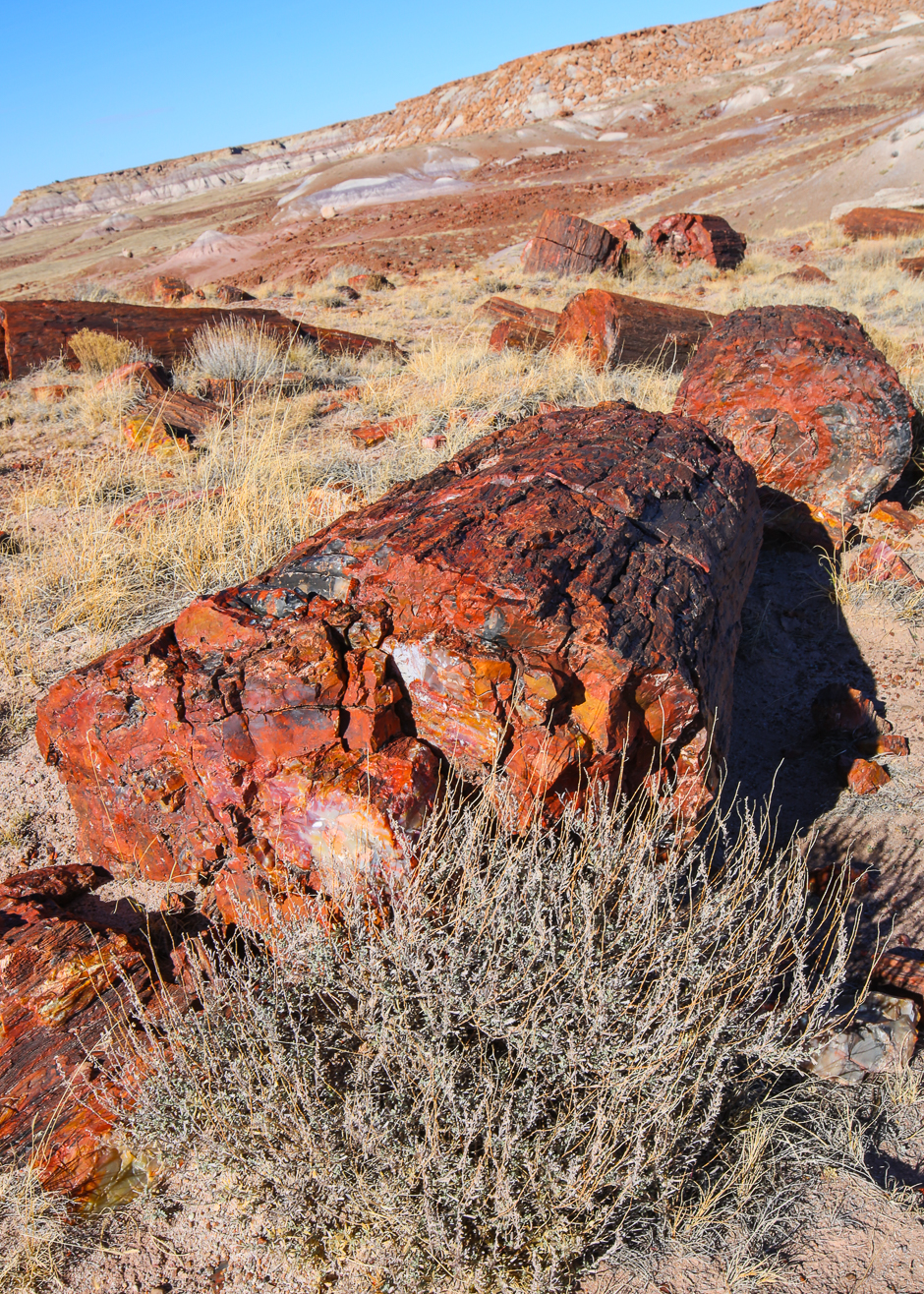 petrifiedforest12-8-20166y9a4558