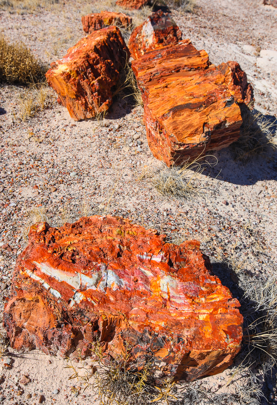 petrifiedforest12-8-20166y9a4563