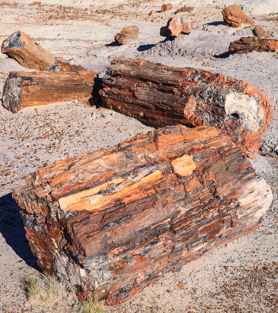 petrifiedforest12-8-20166y9a4574