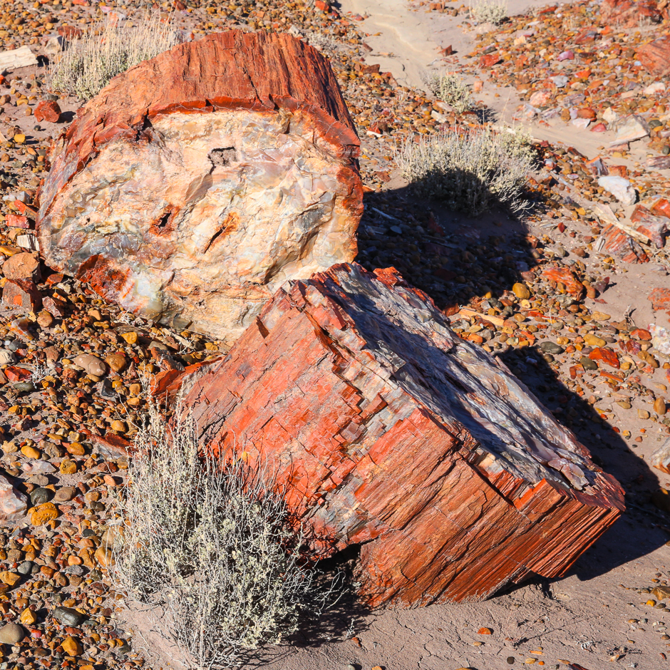 petrifiedforest12-9-20166y9a4691