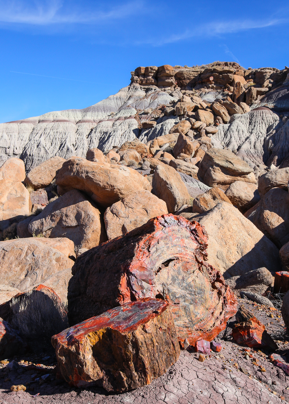 petrifiedforest12-9-20166y9a4742
