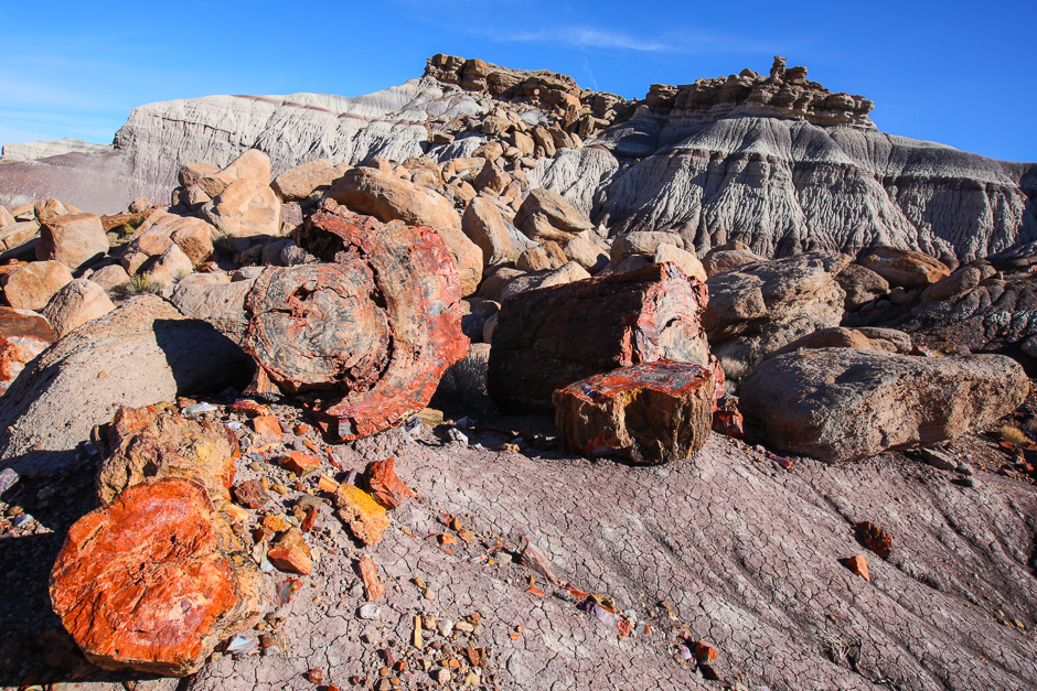 petrifiedforest12-9-20166y9a4747