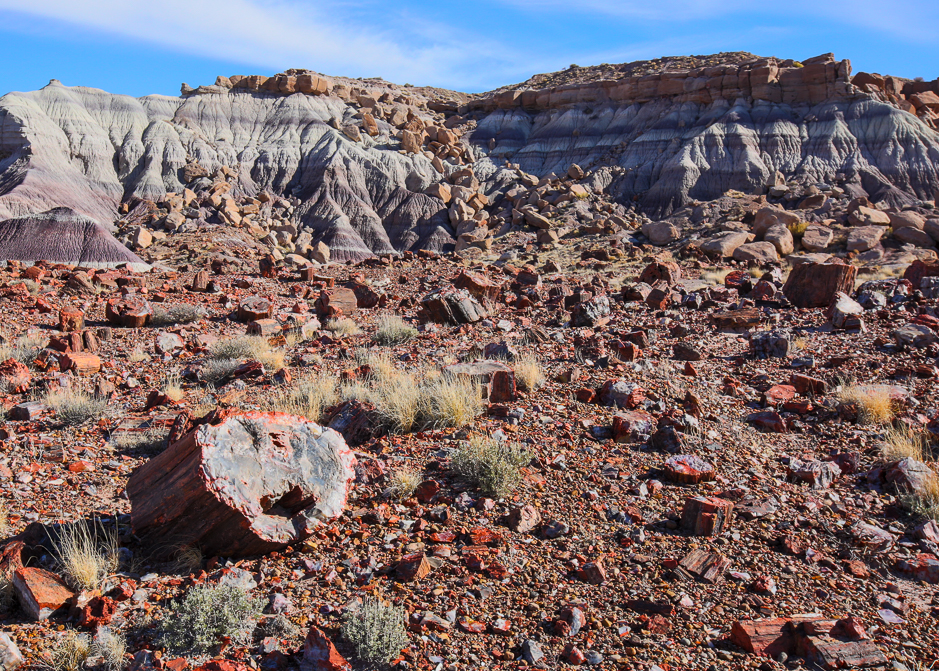 petrifiedforest12-9-20166y9a4782