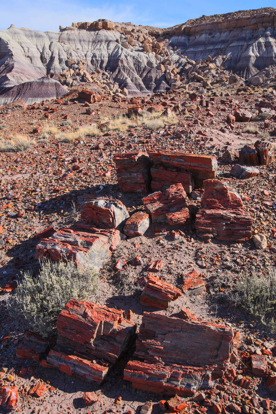 petrifiedforest12-9-20166y9a4787